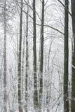 Scène brumeuse et gelée magique de forêt d'hiver Dos brumeux de paysage Images libres de droits