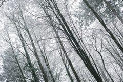 Scène brumeuse et gelée magique de forêt d'hiver Dos brumeux de paysage Photos stock