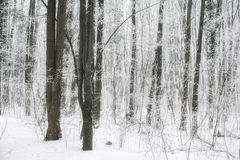 Scène brumeuse et gelée magique de forêt d'hiver Dos brumeux de paysage Photo stock