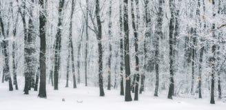 Scène brumeuse et gelée magique de forêt d'hiver Dos brumeux de paysage Photo libre de droits