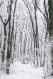Scène brumeuse et gelée magique de forêt d'hiver Dos brumeux de paysage Images stock