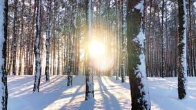 Scène calme de nature d'hiver de paysage de forêt dans le coucher du soleil