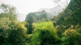 Scène calme pluvieuse de nature de paysage de forêt en montagnes