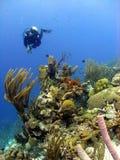 Scène colorée de récif coralien photographie stock