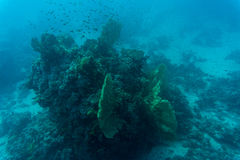 Scène, corail et poissons sous-marins abstraits Image stock