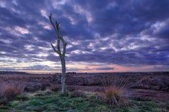 Scène crépusculaire à une lande tranquille, Goirle, Pays-Bas images libres de droits