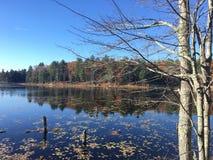 Scène d'étang de chute Photographie stock libre de droits