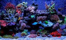 Scène d'aquarium de récif coralien Photographie stock