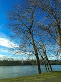 Scène d'arbre d'hiver Photo stock