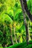Scène d'arbre dans Maui avec des paumes Photographie stock libre de droits