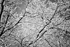Scène d'arbre de l'hiver Image libre de droits