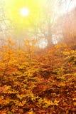 Scène d'automne Photos stock