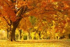 Scène d'automne photos libres de droits