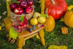Scène d'automne avec des usines, potirons, pommes dans un panier en osier, pots en céramique, chaise en bois, style de cru, compo photos stock