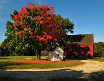 Scène d'automne - Bethpage, NY Photos stock