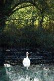 Scène d'automne, château Cumbria de Sizergh Photos stock