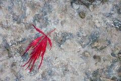 Scène d'automne, château Cumbria de Sizergh Photo stock