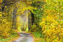 Scène d'automne sur le chemin forestier Photographie stock