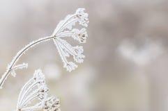 Scène d'hiver Photo stock