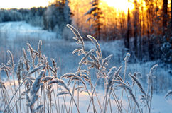 Scène d'hiver photographie stock libre de droits