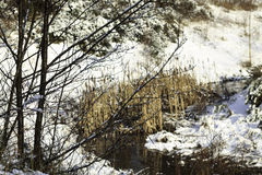 Scène d'hiver d'un courant Photos libres de droits