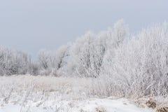 Scène d'hiver dans champs Photo libre de droits