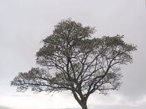 Scène d'hiver de silhouette d'arbre Images libres de droits