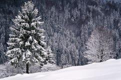 Scène d'hiver, forêt dans le Roumain Carpathiens photographie stock libre de droits