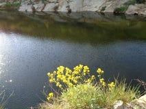 Scène de cascade de rivière photos stock