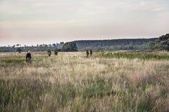 Scène de chasse avec des chasseurs passant par le champ rural pendant la saison de chasse photos libres de droits