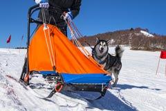 Scène de chien de traîneau Image stock