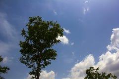 Scène de ciel avec le déplacement de nuages et d'oiseaux Photographie stock