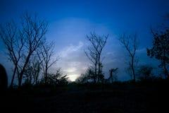 Scène de ciel avec le déplacement de nuages et d'oiseaux Photo stock