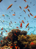 Scène de corail Photo stock