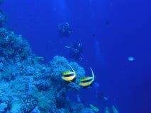 scène de corail Photos stock