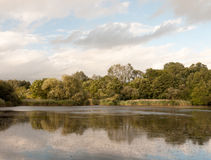 Scène de coucher du soleil au-dessus d'un lac avec des canards et des arbres reflétés Images libres de droits