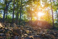 Scène de coucher du soleil dans la forêt Image stock