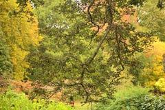 Scène de couleur d'automne Photographie stock libre de droits