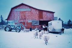 scène de début de la matinée avec des animaux de ferme moutons et chevaux sortant de la grange pendant la neige d'hiver photos stock