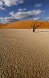 Scène de désert Photographie stock libre de droits
