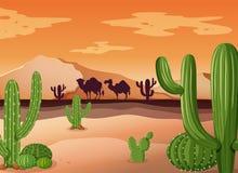 Scène de désert avec le cactus et le coucher du soleil illustration de vecteur