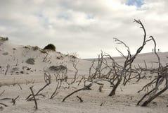 Scène de désert avec les cieux bleus supplémentaires Photographie stock libre de droits