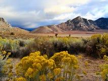 Scène de désert dans l'automne Photographie stock