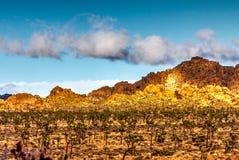 Scène de désert en Joshua Tree images libres de droits