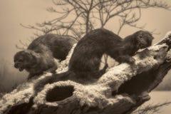 Scène de faune - scène de faune Images libres de droits