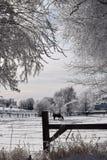 Scène de ferme d'hiver Photos libres de droits