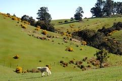 Scène de ferme de moutons image libre de droits