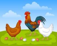 Scène de ferme de poulets Photographie stock libre de droits