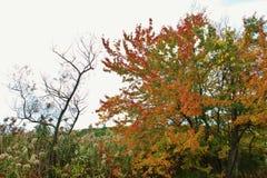 Scène de feuilles d'automne de feuillage d'automne Photo stock