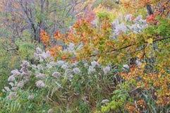 Scène de feuilles d'automne de feuillage d'automne Images stock